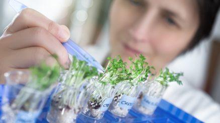 Pesquisa foca ciência na agricultura