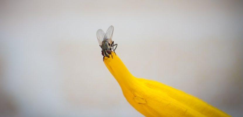 Agricultura do futuro: insetos e ácaros como aliados
