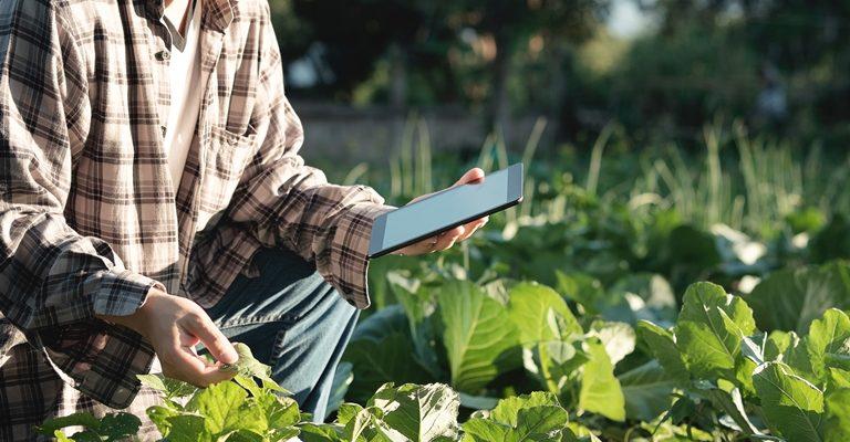 Confira 15 aplicativos para a agropecuária